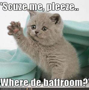 funny-pictures-polite-kitten-has-to-go-to-the-bathroom