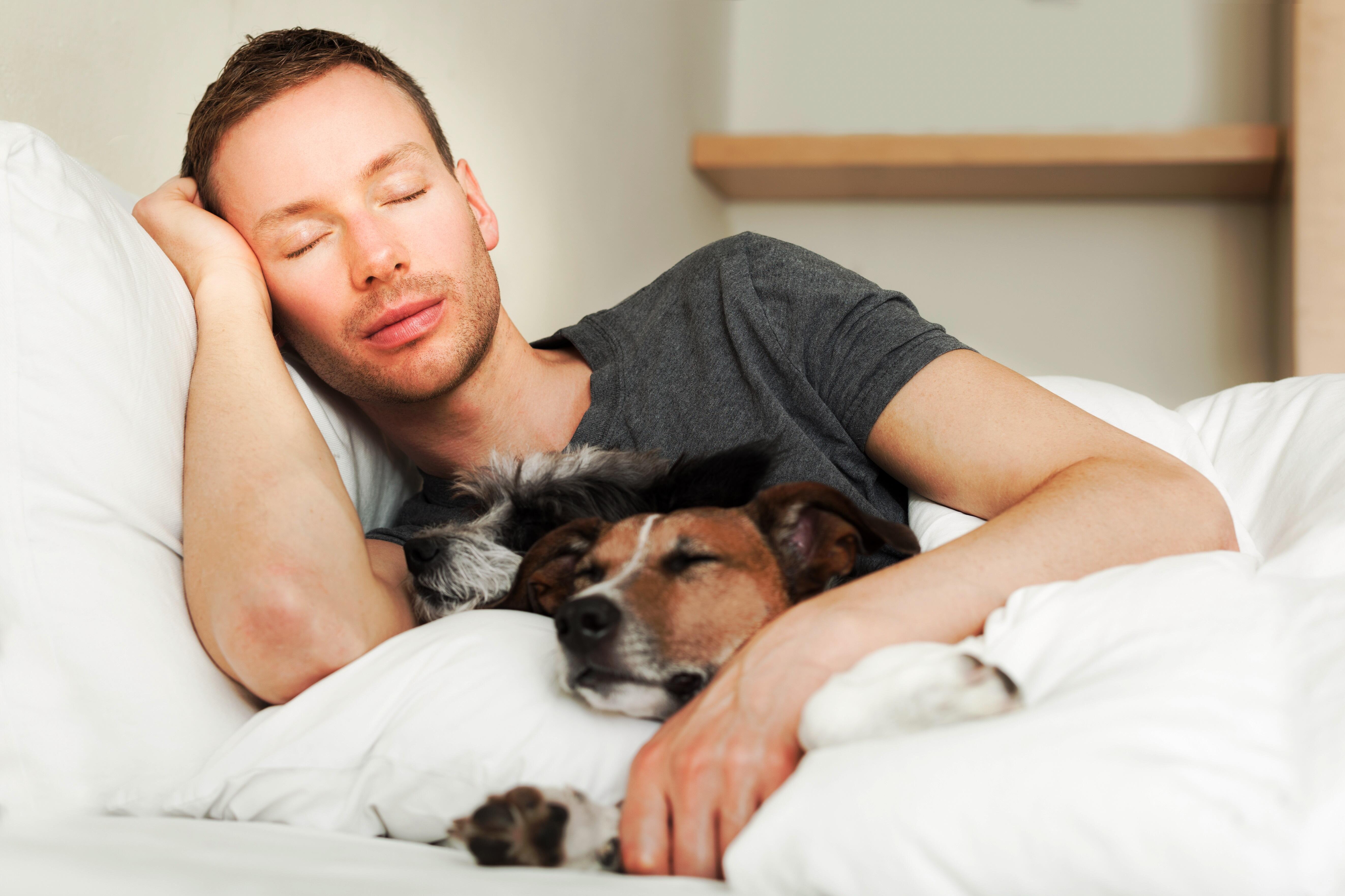 dog owner in bed