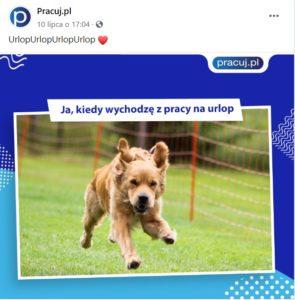 Pies biegnący z radością